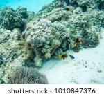 clown fish  domino damsel and... | Shutterstock . vector #1010847376
