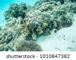 colourful tropical fish... | Shutterstock . vector #1010847382