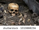 Skull and bones digged from pit ...