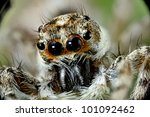 A Little Jumping Spider On A...
