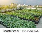 rooftop garden  rooftop... | Shutterstock . vector #1010959666