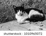 a cat posing   Shutterstock . vector #1010965072