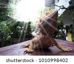 lizards walking on wooden floors | Shutterstock . vector #1010998402