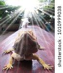 lizards walking on wooden floors | Shutterstock . vector #1010999038