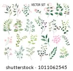 vector  botanical collection.... | Shutterstock .eps vector #1011062545