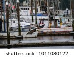 Small photo of Bald Eagle fishing in Makah Harbor in Sequim, Washington
