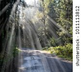 forest road with sun rays in... | Shutterstock . vector #1011113812
