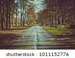 blurred road in a forest with...   Shutterstock . vector #1011152776