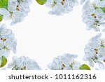flowering branch of apple... | Shutterstock . vector #1011162316