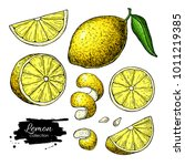 lemon vector drawing. summer... | Shutterstock .eps vector #1011219385