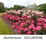 beautiful vibrant colorful...   Shutterstock . vector #1011283948