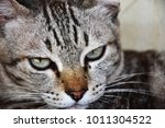 the face of a cute cat with... | Shutterstock . vector #1011304522