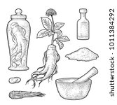 set panax ginseng. root  slise  ...   Shutterstock .eps vector #1011384292