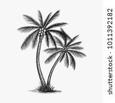 hand drawn coconut tree vector... | Shutterstock .eps vector #1011392182
