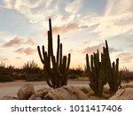 desert of cactus island of...   Shutterstock . vector #1011417406