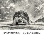 galapagos giant tortoise and... | Shutterstock . vector #1011418882