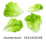 Lettuce leaves isolated on...