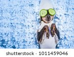 Stock photo spa treatments a dog in his pajamas mask of cucumbers a dog with cucumbers 1011459046