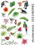 toucan   humming bird  tropical ... | Shutterstock . vector #1011483982