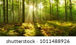 forest of beech trees... | Shutterstock . vector #1011488926