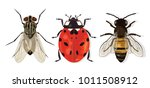 insects set. house fly  ladybug ... | Shutterstock .eps vector #1011508912