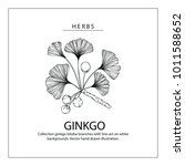 collection ginkgo biloba... | Shutterstock .eps vector #1011588652