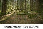 Summer Alpine Forest During...