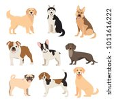 Stock vector flat style dogs collection cartoon dogs breeds set vector illustration isolated on white 1011616222