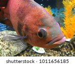tropical fish in aquarium | Shutterstock . vector #1011656185