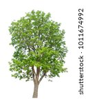 green trees isolated on white... | Shutterstock . vector #1011674992