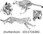 vector drawings sketches... | Shutterstock .eps vector #1011726382