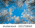 the natural view from the... | Shutterstock . vector #1011728365