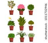 pots of deciduous  flowering ... | Shutterstock .eps vector #1011732946