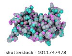 molecular model of human growth ... | Shutterstock . vector #1011747478