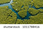 aerial view of mangrove forest... | Shutterstock . vector #1011788416
