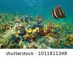 colorful underwater marine life ... | Shutterstock . vector #1011811348