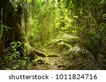lush green foliage in tropical... | Shutterstock . vector #1011824716