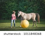 free horse playing a big yellow ...