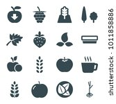 leaf icons. set of 16 editable...
