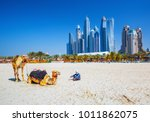 The Camels On Famous Jumeirah...
