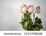 Wilting Bouquet Of Roses