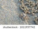 soldier crab or mictyris ... | Shutterstock . vector #1011957742
