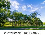 green public botanic park with... | Shutterstock . vector #1011958222