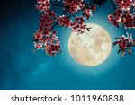 romantic night scene  ... | Shutterstock . vector #1011960838