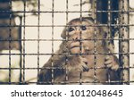 Monkey Staying In The Cage  ...