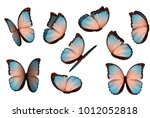 Stock vector butterfly vector illustration set colorful isolated butterflies insects lepidoptera morpho 1012052818