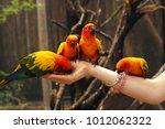Ara Parrots Sit On Human Hands...
