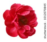 Red Peony Flower Isolated On...