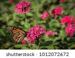 pink cluster flower bush with... | Shutterstock . vector #1012072672