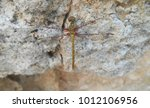 Dragonfly On A Stone Background